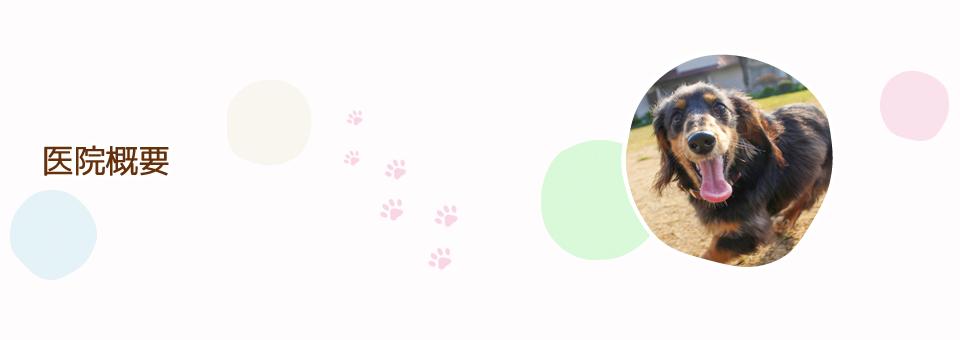 犬 猫 コロナ